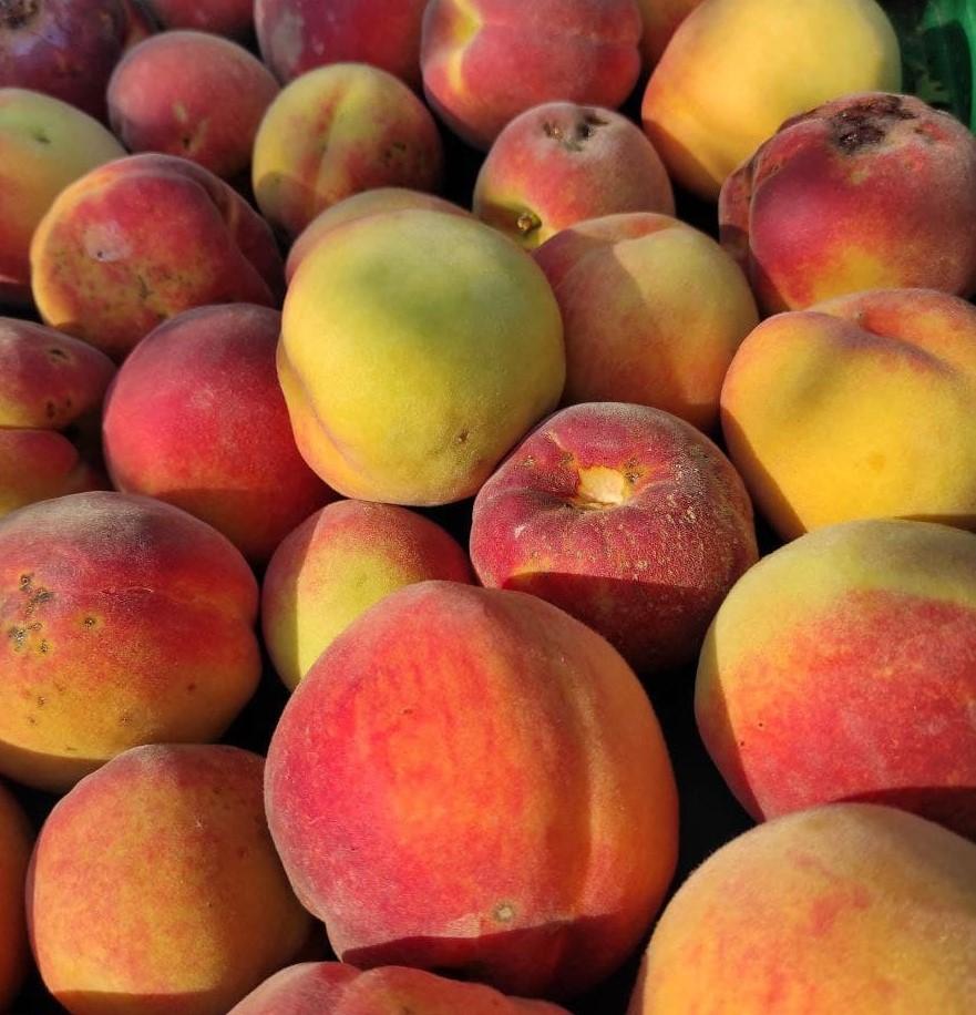 Pfirsiche mit mehr oder weniger Macken 2021